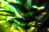 Pineapple (Alessandro Pietromartire) Tags: light playing detail macro green colors closeup fruit contrast canon shadows exotic pineapple ananas frutta macroshot macrophotography contrasto esotico 5dmarkii