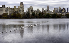 Jacqueline Kennedy Onassis Reservoir II (Joe Josephs: 2,861,655 views - thank you) Tags: nyc newyorkcity newyork skyline centralpark manhattan fine photojournalism panoramas centralparknewyork urbanlandscapes fineartphotography landscapephotography newyorkcityskyline urbanparks jacquelinekennedyonassisreservoir fineartprints nikond810 joejosephs joejosephsphotography joejosephs2015