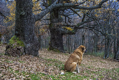 El guardián del bosque (javipaper) Tags: forest bosque