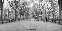 Central Park trees panorama (dybcar) Tags: nyc panorama newyork fall nikon centralpark manhattan pano panoramic d600