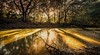 Reflections on the Moss-Covered River (JDS Fine Art & Fashion Photography) Tags: river reflections water shadows landscape trees leadinglines nature sunset