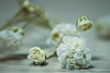 something better than nothing... (Midori (K)) Tags: flower sad