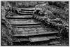 Heath Park and Runcorn Hill (6 of 8) (andyyoung37) Tags: runcorn runcornhill silhouette steps uk cheshire tree england unitedkingdom gb