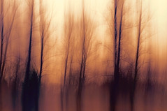 Rooted in Mystery (charhedman) Tags: intentionalcameramovement icm trees roots winter branches mysterious