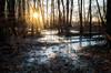 Frozen Thicket (eklantti) Tags: winter landscape frozen sea pond sun sunstar cold ice trees branch branches