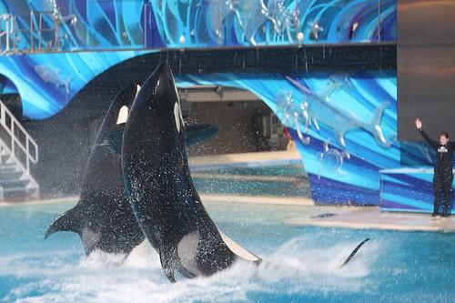 Thumbnail from SeaWorld San Diego