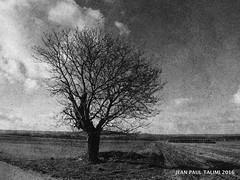 La croisée des chemins (JEAN PAUL TALIMI) Tags: appoigny rue talimi campagne vent noiretblanc nature arbre campagnebourguignonne camapagne vieux silouettes arbres monochrome texture