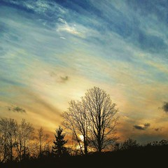 Long day #sunset #nature #fatigue #trees (Shane Hall Photography) Tags: sunset fatigue trees nature