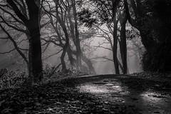 sous l'ombre et la lumière (R:v) Tags: france français finistère forest forêt light life lumière landscape bretagne brest bw blackwhite black fog misty nature nb noirblanc ngc fuji fujifilm xt1