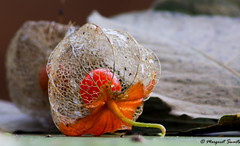 herfst (Meeden Photography Club) Tags: autumn margriet