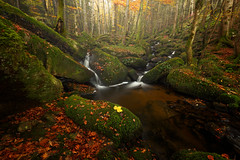 Misty Woods (Laurent BASTIDE Photographies) Tags: auvergne clermont clermontferrand canon woods trees green autumn fall river cascades waterfall leef fog misty rocks