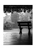 lluvia de verano (julianmartinez_) Tags: rain longexposure lluvia blancoynegro blackandwhite bnw byn landscape paisaje