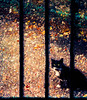 Wild Thing.. (sbox) Tags: cats bars railing painterly textures topaz