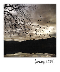 New Year's Day at Beaver Lake (jeanne.marie.) Tags: mountains iphoneography iphone7plus instant newyearsday flying winter january ashevillenc beaverlake trees silhouettes birds 365the2017edition 3652017 day1365 1jan17