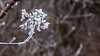 IMG_3310 (yveseric) Tags: hiver nature gel sceaux noir blanc