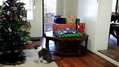 Pressies on the table, Neurmal eyeing the tree