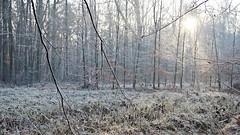 Frosty forest (pszcz9) Tags: polska poland przyroda nature natura las forest forestimages szron frost gałąź branch grudzień december poranek morning słońce sun pejzaż landscape beautifulearth a77 sony drzewo tree
