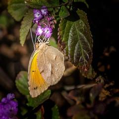 Take Down (Portraying Life, LLC) Tags: unitedstates arizona pima sonorandesert flower handheld nativelightng ventanacanyonwash