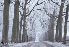 Au bout du chemin ... (martine_ferron) Tags: arbres allée chemin givre hiver château mayenne