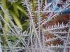 cold outside (~Ingeborg~) Tags: meinge winter vorst frost vriezen freeze koud cold ijskristallen icecrystals raam window strepen stripe kriskras crisscross tekening drawing holland nederland texture pattern amsterdam coldoutside