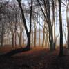 Ashridge Mist II (meniscuslens) Tags: ashridge forest wood trees mist fog sunlight rays winter national trust buckinghamshire