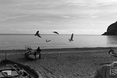 Liguria (fabiolug) Tags: sea water mediterranean mediterraneansea marligure martirreno marmediterraneo mediterraneo sky seagulls seagull birds bird beach boats boat nature liguria ligury italia italy leicammonochrom mmonochrom monochrom leicamonochrom leica leicam rangefinder blackandwhite blackwhite bw monochrome biancoenero 35mmsummicronasph 35mmf2summicronasph summicronm35mmf2asph summicron35mmf2asph 35mm summicron leicasummicron leica35mm landscape