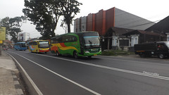 Royal Safari ft. Rosalia Indah & GMS (Rakka Gustyan Pratama) Tags: bus bismania