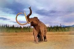 Wooly Mammoth! (JLS Photography - Alaska) Tags: animals prehistoric woolymammoth museum whitehorse yukon touristattraction jlsphotographyalaska artwork topaz outdoor
