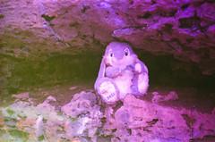 sauerkraut cave (anna0livia) Tags: louisville ky kentucky tomsawyerstatepark kentuckystatepark sauerkrautcave cave stuffedanimal ruraldecay decay film pentaxk1000 revolog revologkolor