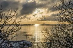 Golden sea (tkaiponen) Tags: finland helsinki rx100iii water landscape sky sea ocean baltic clouds sun golden winter trees branch twig reflection suomenlinna world heritage site
