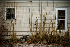 In The Weeds (Wєirdlig) Tags: abandoned abandonment urbex decay exploring exploration rurex asbestos creepy abstract eclectic vacant photography destroyed urban ruins trespass trespassing haunted desolate architecture building house home colorado exterior weeds plants windows wilted withered tiles shingles