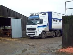 DRZ 7887 - John Gardiner Livestock Haulage Kilrea County Londonderry (Jonny1312) Tags: lorry volvo fh13 pezzaioli livestocktruck cattletruck pigtruck cattle kilrea