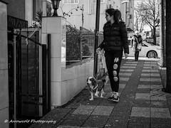 Street 250 (`ARroWCoLT) Tags: bnwdemand bnw bnwstreet people shop streetart istanbul türkiye türkei turkey street sokak samsung nx streetphotography outdoor siyahbeyaz art bw blackwhite monochrome blackandwhite arrowcolt dogwalker perspective 30mm f2 sidewalk dogwalk ishootpeople taksim dog köpek road