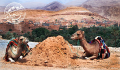 Tinerhir oasis (sahatours) Tags: voyage africa viaje landscape nikon desert camel morocco maroc viagem marruecos viaggio marrocos travelphotography travelphoto desertlife