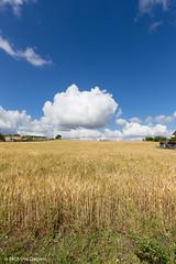 Inizia il cammino (Vito Galgano) Tags: field clouds nuvola campo grano orata escursione calitri