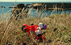 Off-roading (John 3000) Tags: ocean california county sea cliff dog water grass rock coast mar ride pacific character helmet cartoon goggles peanuts snoopy motorcycle mendocino wheelie 2015