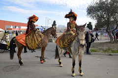 Un petit tour a Cheval passion Avignon (maxguitare1) Tags: horse france caballo cheval nikon cavallo horseriding amazona amazone equitacin quitation cavalire horsewoman equitazione amazzone chevalpassion d7000 nikond7000