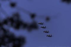 San Francisco Fleet Week 2015 (julesnene) Tags: sf sanfrancisco california sky plane us unitedstates airshow blueangels fleetweek blueangel 2015 canonextenderef14xii unitedstatesnavyblueangels canonef70200mmf4lusmlens julesnene juliasumangil canon7dmarkii canon7dmark2