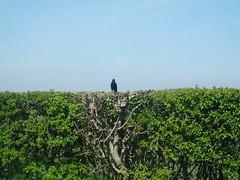 I stand alone (Nicolaspeakssometimes) Tags: sky bird nature alone
