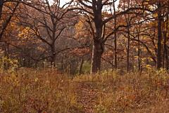Pioneer Woods