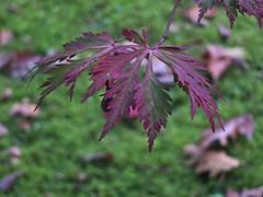 Japanse tuin (Gerard Stolk (vers L'Action de grâce)) Tags: denhaag haag thehague clingendael lahaye japansetuin