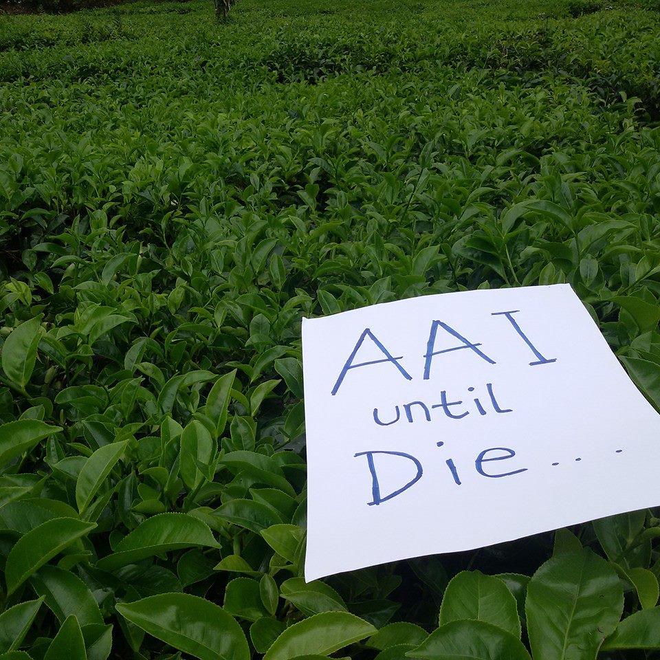 aai until die