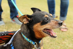 """Dogs, dog park, richmond • <a style=""""font-size:0.8em;"""" href=""""http://www.flickr.com/photos/31682982@N03/22336283378/"""" target=""""_blank"""">View on Flickr</a>"""