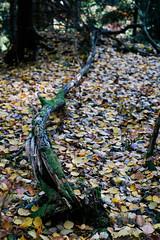 Waldboden im Herbst (_Klickwurm_) Tags: wood autumn max fall forest ast holz wald klickwurm wsfhomework11