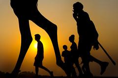Camel legs at the Pushkar Camel Fair 2015 (Bertrand Linet) Tags:
