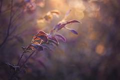 Let Your Light Shine (Elizabeth_211) Tags: light nature garden bokeh