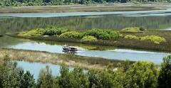 A.1 (Paty Neta) Tags: landscape agua barco valdivia humedal