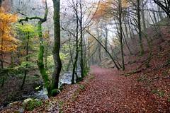 Birnam Glen (eric robb niven) Tags: autumn winter walking landscape scotland dundee perthshire glen dunkeld birnam ericrobbniven