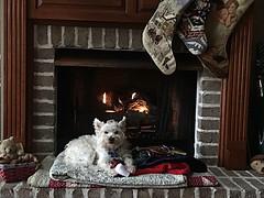 Christmas Decorating [in Explore] (scmrsgena) Tags: inexplore explore toys quilt hearth teddybear fireplace westipoo dog puppylove aviarylane home mrsgena raz christmasstockings littledoglaughedstories christmas