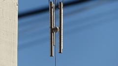 P1030764 (하나,둘셋넷!) Tags: windchimes